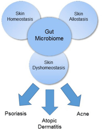 Skin and the gut
