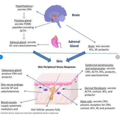 brain-skin connection