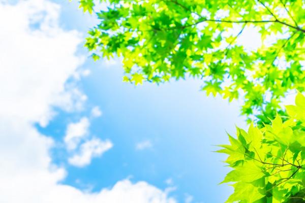 青空と新緑