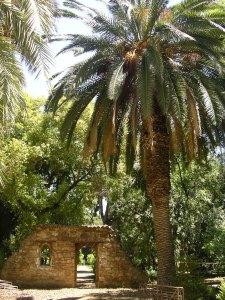 Palmier du Jardin botanique de Palerme