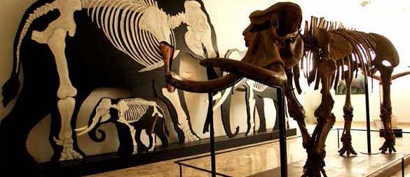 museogemmellaro