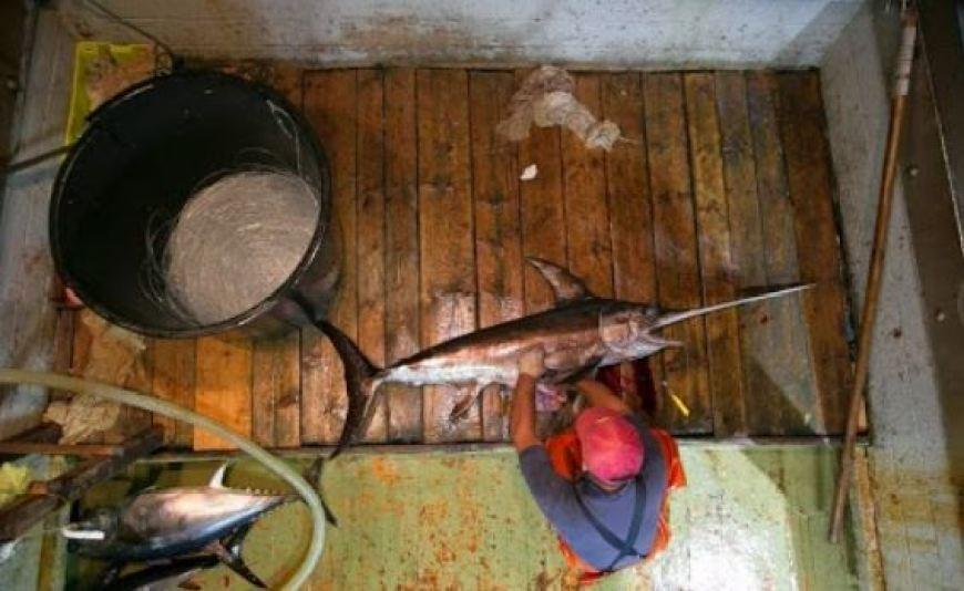 Рыбалка на рыбу-меч