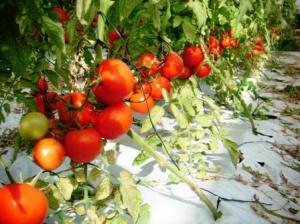 Agricoltura biologica 3