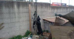 I cani di Maniaci uccisi a dicembre 2014