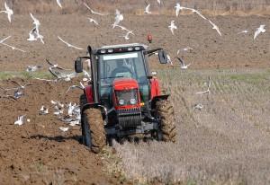 agricultura_campagna