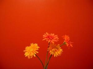 fiori arancione