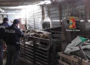 Polizia ragusa azienda agricola 4 (3)
