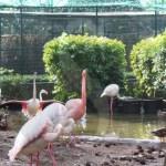 Parco ornitologico Palermo, uccelli