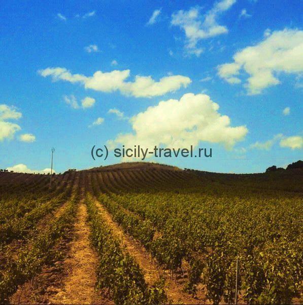 Виноградники Алькамо DOC