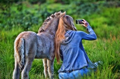 donna scatta un selfie con puledro