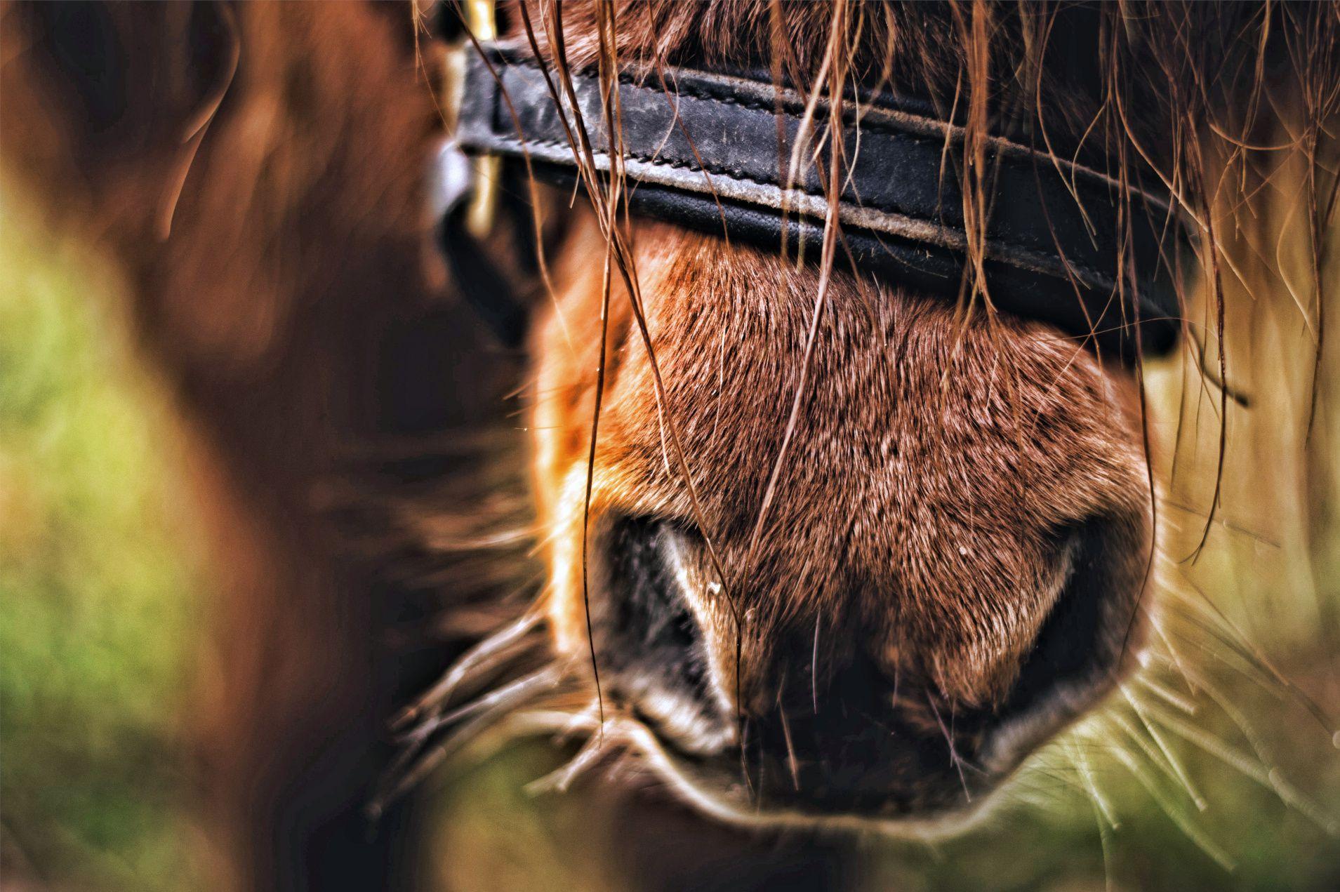 Escursioni a Cavallo alcantara