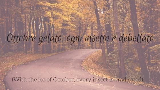 Blog Ottobre insetto