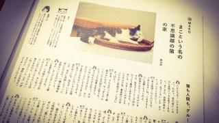 不思議顔の猫、まこちゃんが死んだ &Premium連載は…どうなるの?