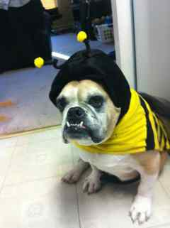 Bulldog Snoopy Bumble Bee