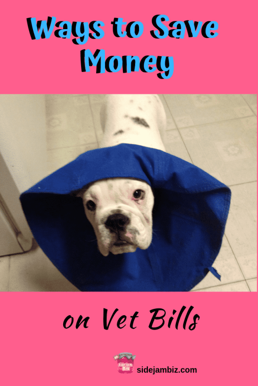 5 Smart Ways to Save on Vet Bills #savemoney #petinsurance #smartshopping #petcare #pets #dogs #doglover #bulldoglover #englishbulldog #personalfinance