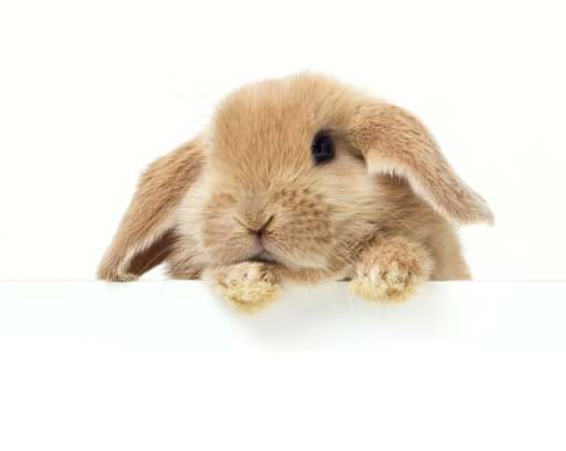 Cute Rabbit and other Free Stuff