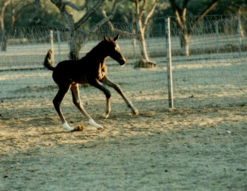 Valiant's first pirouette. Photo by Jeanette Sassoon