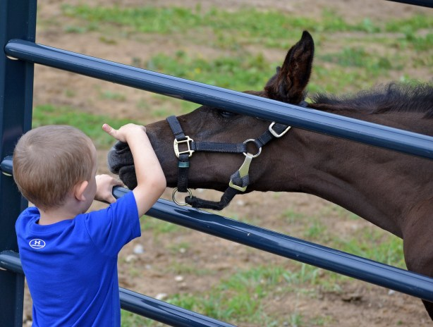 MS Cassini Boy (Cassini II-Offspring by Habsburg) – 2012 KWPN colt inherited his sire's trademark movement and jump, plus his dam's wonderful temperament. Shown here, playing with Christine's great-nephew, age 3. Photo by Saran Owen