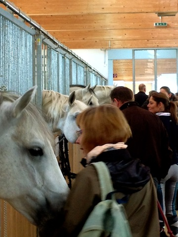 Sweet and loving stallions greet students in Heldenberg.