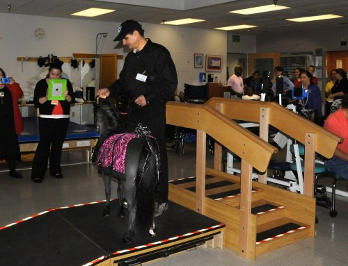 Therapy horse Magic demonstrates rehab training stairs and ramps for the patients.