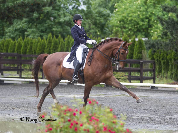 Furst Fiorano showing off his trot. Photo by Mary Cornelius