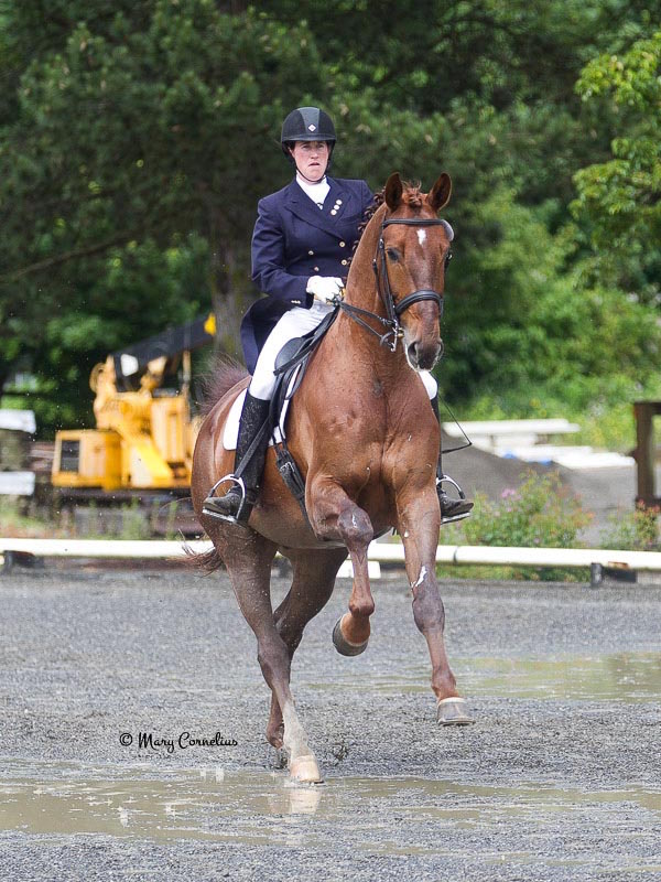 Alyssa and Furst Fiorano, a Westfalen gelding by Furst Piccolo x Donnerbube I. He was ranked #10 in USDF rankings in 2014. Photo by Mary Cornelius