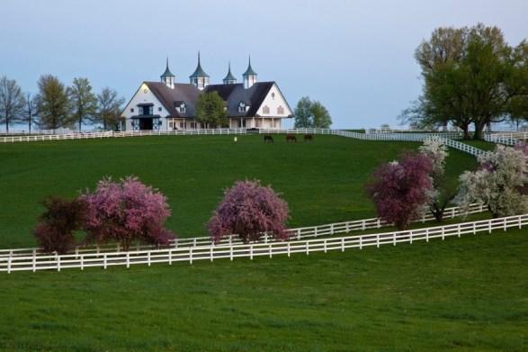Beautiful horse farms dot the Lexington landscape Photo courtesy of VisitLex.com