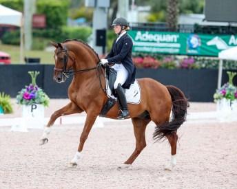 Oldenburg Stallion - Royal Prinz