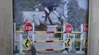 Holsteiner Stallion - Lieutenant Kije