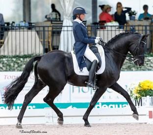 Oldenburg Stallion- Rubinero
