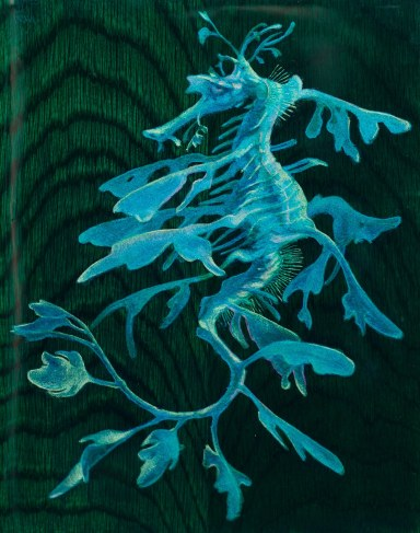 "Jason McPhillips, ""Sea Dragon"", Mixed media on Oak panel 9″x7″, SOLD"