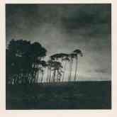 Paper Negative: Trees, Galloway, Scotland