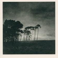 Paper Negative: Trees, Galloway, Scotland