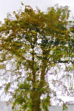 1000-fin swimming tree