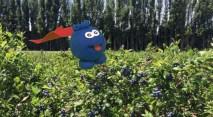 StopMotion_FlyingBlueberry