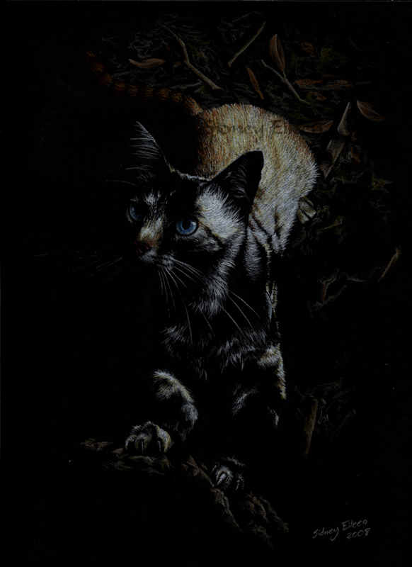 TItle: Midnight Huntress, Artist: Sidney Eileen, Medium: colored pencil on black paper