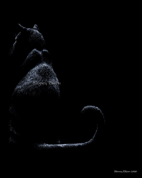 Title: Opposites - Black, Artist: Sidney Eileen, Medium: white pencil on black paper