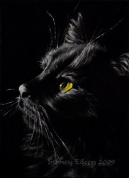 Title: Ringo, Artist: Sidney Eileen, Medium: oils on canvas board