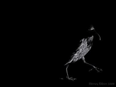 Title: The Rook, Artist: Sidney Eileen, Medium: white pencil on black paper