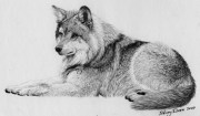 draw fur with graphite pencil