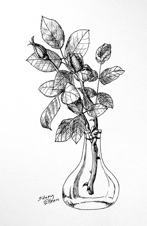 Title: Rose Buds - Speedball 512 Nib, Artist: Sidney Eileen, Medium: ink on paper