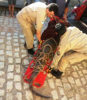 Bombeiros capturam jacaré em Mossoró
