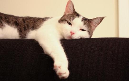 新家與貓 New Place & Cat