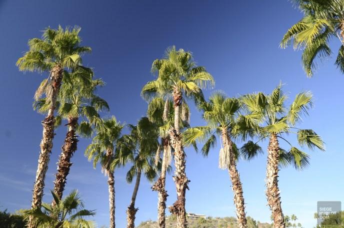 DSC_0251 - Carnet d'adresses à Scottsdale, AZ - hotels, etats-unis, arizona, amerique-du-nord, a-faire