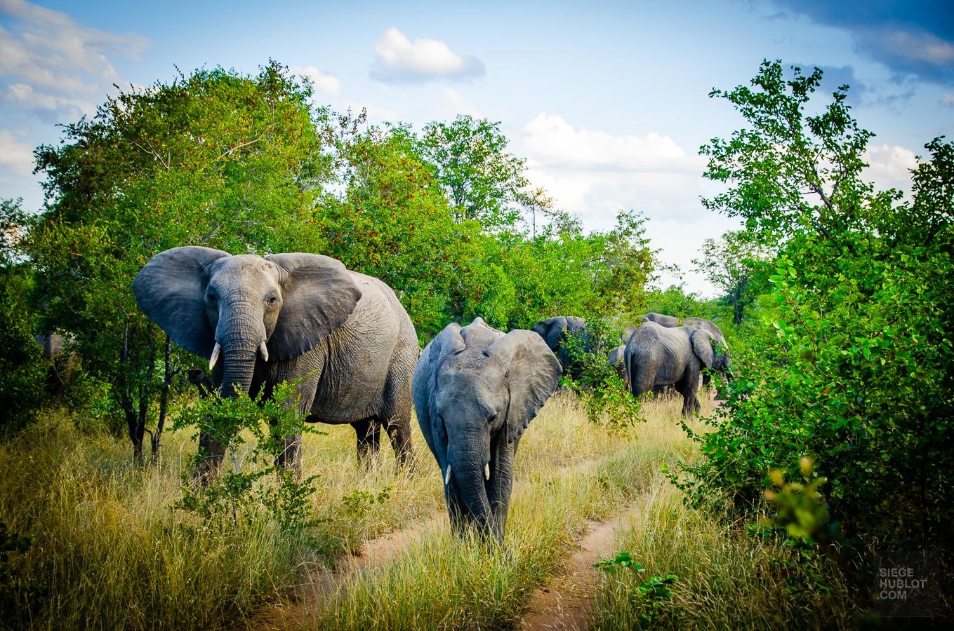 Au coeur de la savane africaine - afrique-du-sud, afrique, a-faire