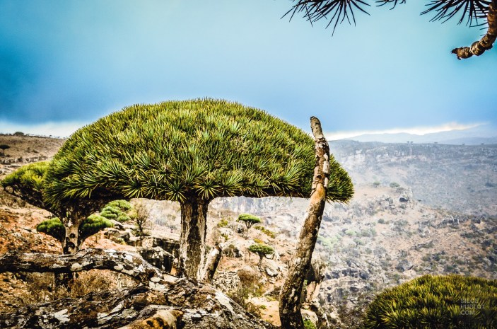 socotra-4921 - L'île de Socotra, le dernier paradis perdu! - yemen-asie, asie, a-faire