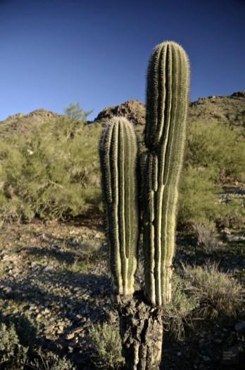 DSC_0330 - L'Arizona de A à Z - etats-unis, featured, destinations, arizona