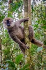 MadaRN7-7832 - Road trip à Madagascar! Partie 1 - rode-trip, madagascar, featured, destinations, afrique
