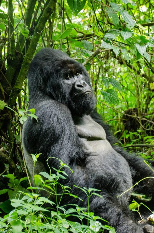 congorwanda-9509 - Aux pays des gorilles, le Congo et le Rwanda - rwanda, destinations, congo, afrique, a-faire