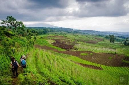 congorwanda-9616 - Aux pays des gorilles, le Congo et le Rwanda - rwanda, destinations, congo, afrique, a-faire